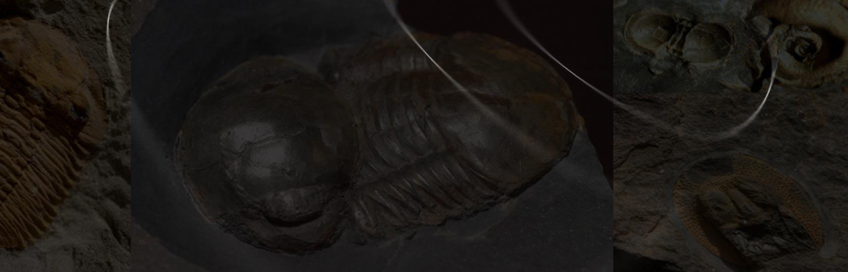 French Trilobites